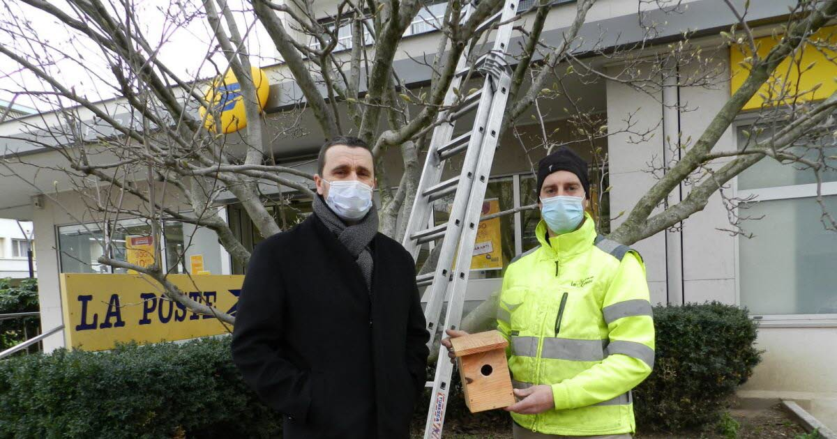 The coteau.  Fifty nest boxes will be installed in the coteau